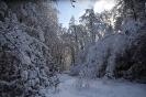 prichod_zimy_5